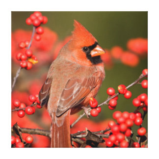 Northern Cardinal on Common Winterberry Canvas Print