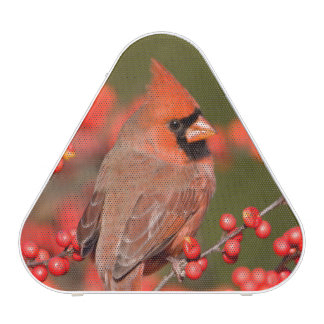 Northern Cardinal on Common Winterberry Speaker