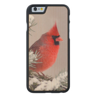 Northern Cardinal Perched In A Tree Carved® Maple iPhone 6 Slim Case