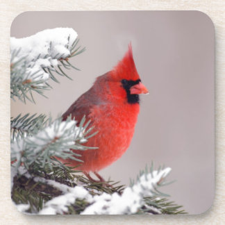 Northern Cardinal Perched In A Tree Drink Coaster