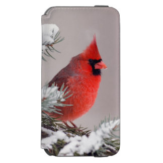 Northern Cardinal Perched In A Tree iPhone 6/6s Wallet Case