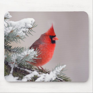 Northern Cardinal Perched In A Tree Mouse Pad