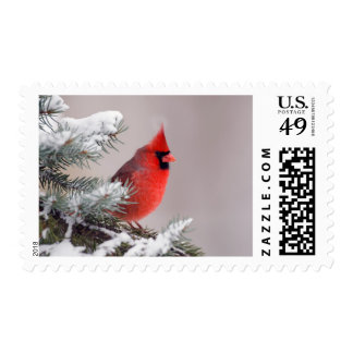 Northern Cardinal Perched In A Tree Postage Stamps