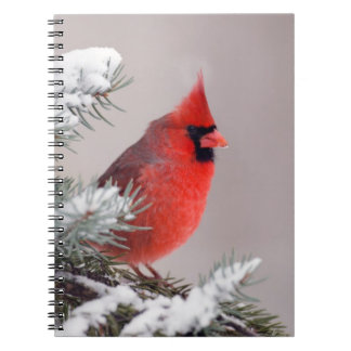 Northern Cardinal Perched In A Tree Spiral Notebook