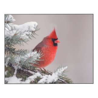 Northern Cardinal Perched In A Tree Wood Wall Art