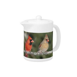 Northern Cardinal Photograph Teapot