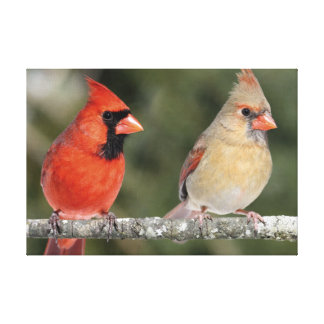 Northern Cardinal Photograph Wrapped Canvas Canvas Print