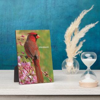 Northern Cardinal Display Plaque