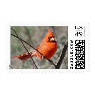 Northern Cardinal Postage Stamps