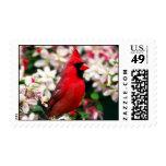 Northern Cardinal Stamp