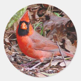 Northern Cardinal Sticker