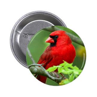 Northern cardinals button