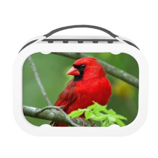 Northern cardinals yubo lunch boxes