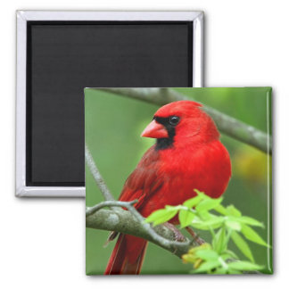 Northern cardinals refrigerator magnets