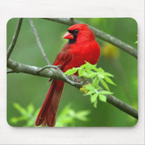 Northern cardinals mouse pad