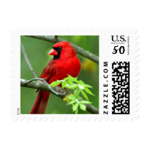 Northern cardinals postage