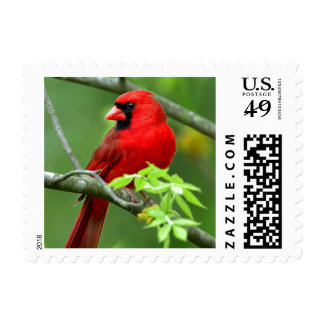 Northern cardinals stamps