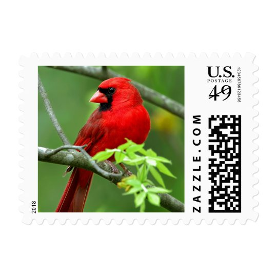 Northern cardinals postage