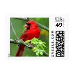 Northern cardinals postage stamp
