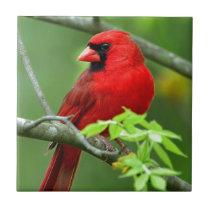 Northern cardinals tile