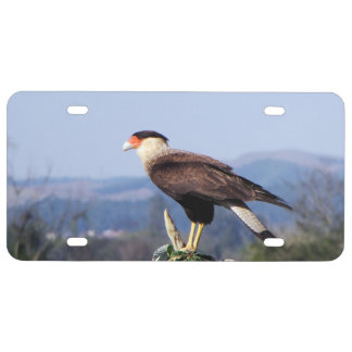 Northern Crested Caracara Bird of Prey on tree License Plate