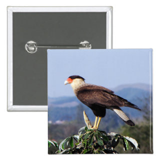 Northern Crested Caracara Bird of Prey on tree Pinback Button