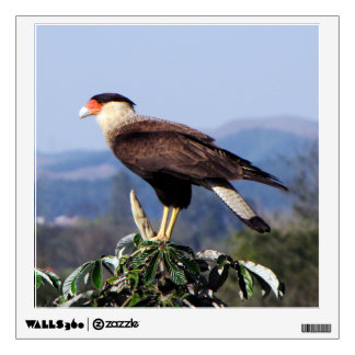 Northern Crested Caracara Bird of Prey on tree Room Stickers