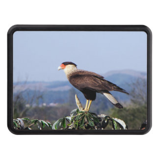 Northern Crested Caracara Bird of Prey on tree Trailer Hitch Cover