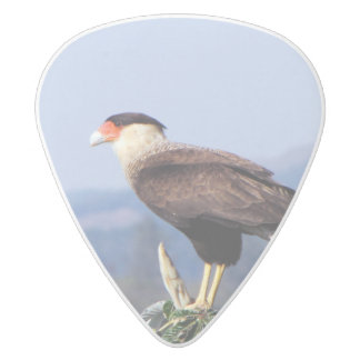 Northern Crested Caracara Bird of Prey on tree White Delrin Guitar Pick