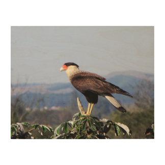 Northern Crested Caracara Bird of Prey on tree Wood Wall Art