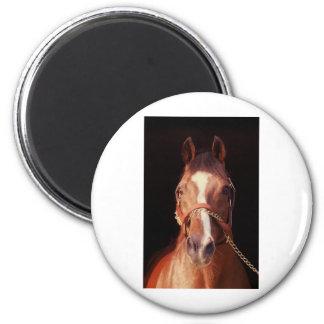 Northern Dancer...World's Greatest Stallion 2 Inch Round Magnet