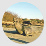 Northern Elephant Seal, Adult Male Round Stickers