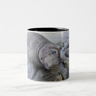Northern Elephant Seal Mug