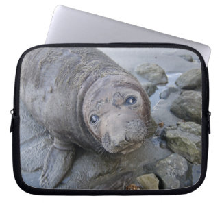Northern Elephant Seal Pup; Baby Animal Photo Laptop Computer Sleeve