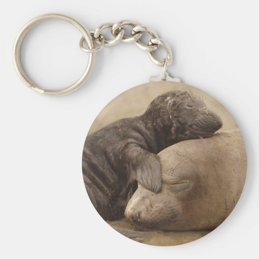 Northern Elephant Seal with her pup Basic Round Button Keychain