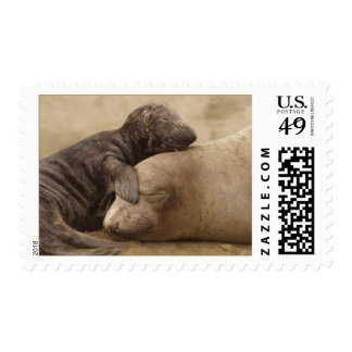 Northern Elephant Seal with Pup Postage Stamps