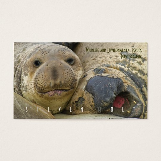 Northern Elephant Seals Business Card