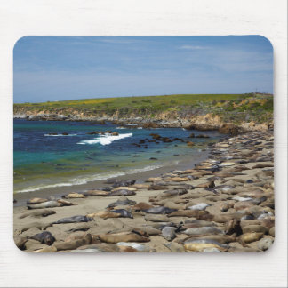 Northern Elephant Seals Mouse Pad