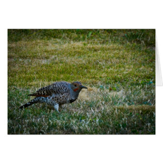 Northern Flicker #1 Greeting Cards
