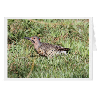 Northern Flicker Card