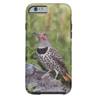 Northern Flicker, Colaptes auratus, Red-shafted Tough iPhone 6 Case