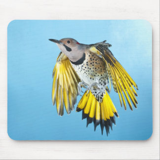 Northern Flicker Flying 2 Mouse Pad