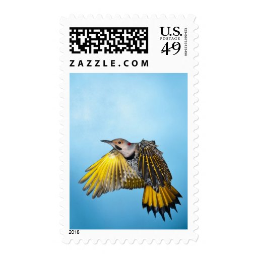 Northern Flicker Flying 3 Stamp