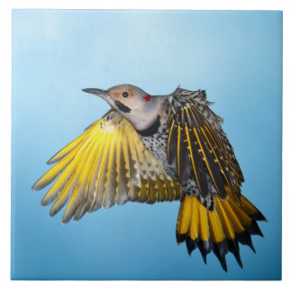 Northern Flicker Flying 3 Tile