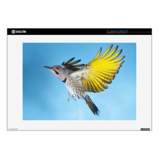 """Northern Flicker Flying 4 15"""" Laptop Decal"""