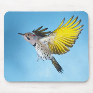 Northern Flicker Flying 4 Mouse Pad