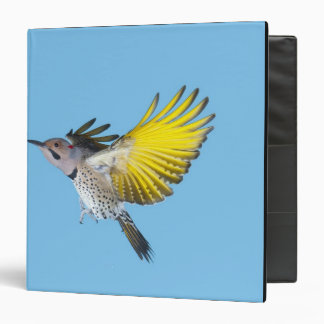 Northern Flicker Flying Vinyl Binders