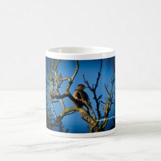 Northern Flicker in a tree Coffee Mug