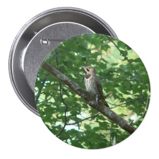 Northern Flicker in Tree Pin