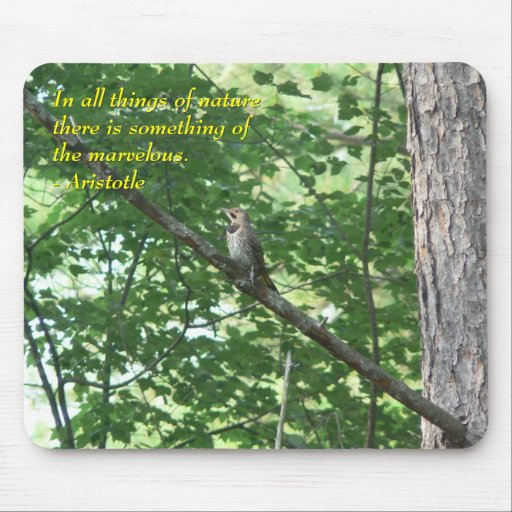 Northern Flicker in Tree Mouse Pad